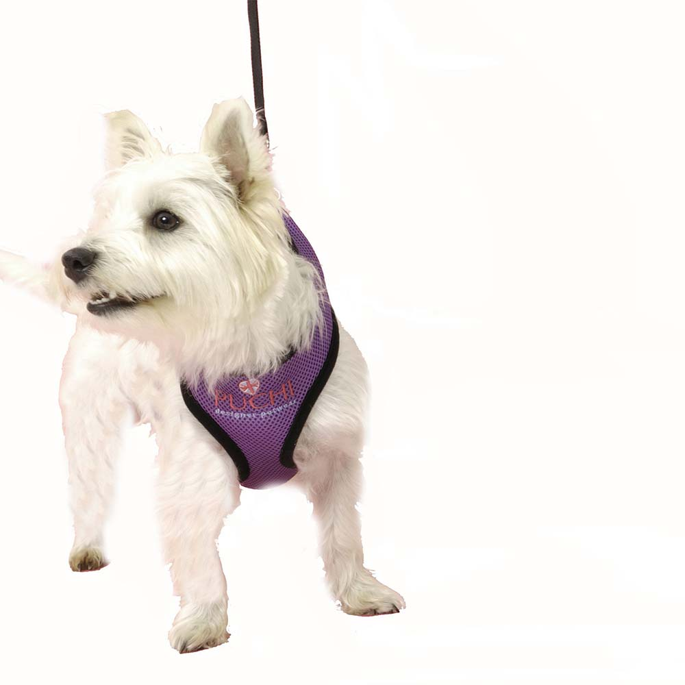 Waffle Dog Harness and Lead in Purple